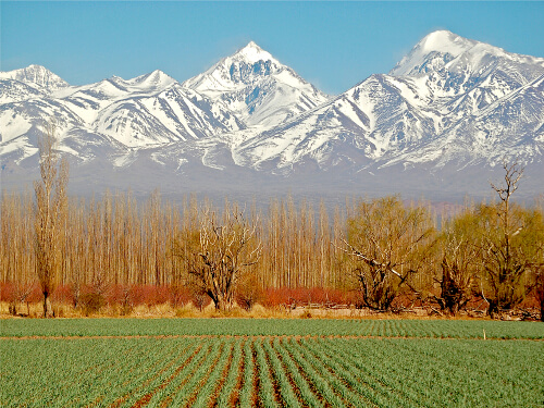 Best Food & Wine Experiences in Mendoza