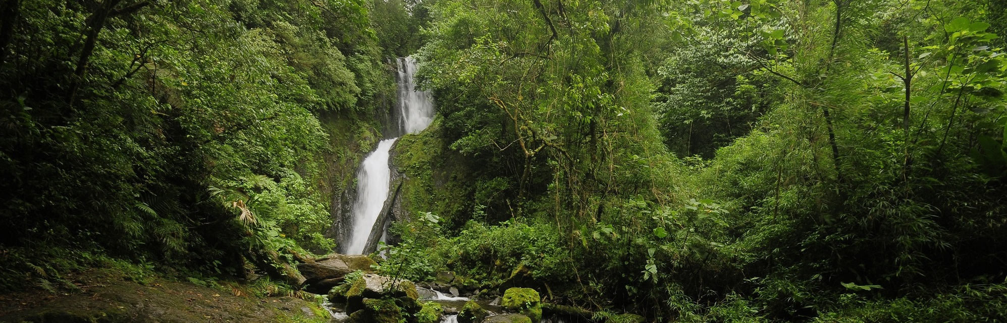 Costa Rica Rainforest Immersion