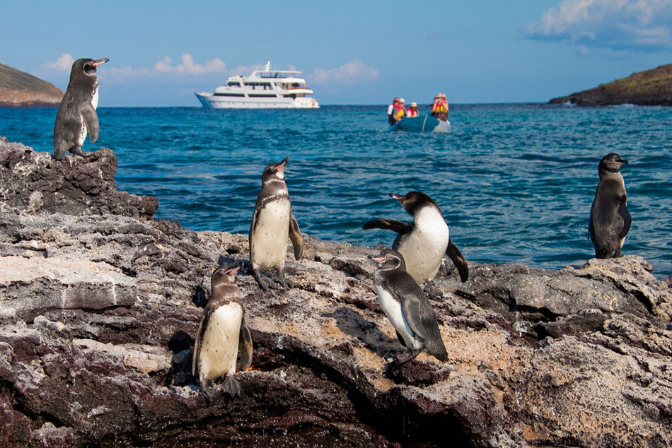 1-galapagos-penguins-sea-star-journey
