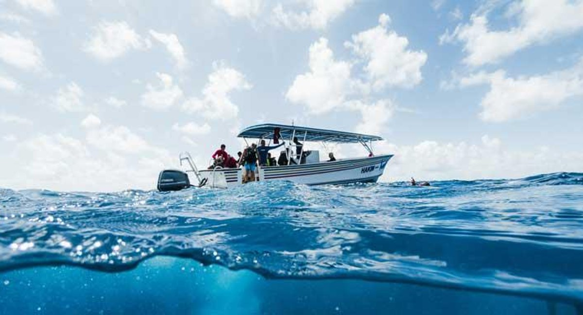 Belize Dive Haven Scuba Diving Courses